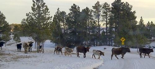 West_Custer-20130204-00446