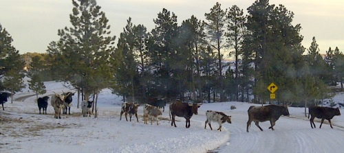 West_Custer-20130204-00446