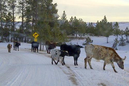 West_Custer-20130204-00449